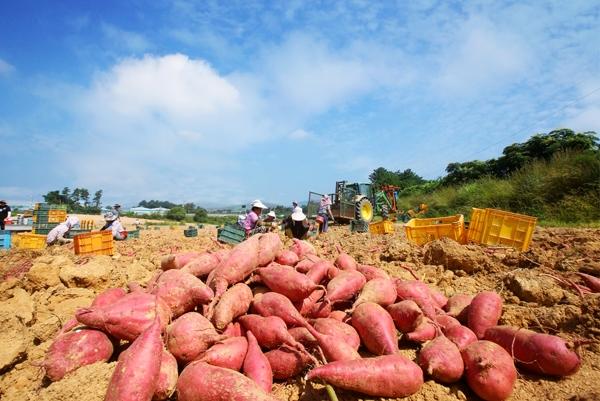 커지는 국제 식량위기 우려…한국은 영향없나